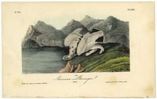 Audubon octavo American Ptarmigan P 300 Litho