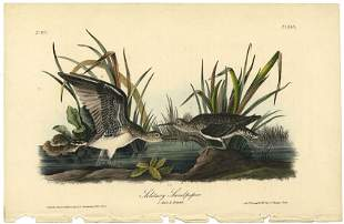 Audubon octavo Solitary Sandpiper Pl 343