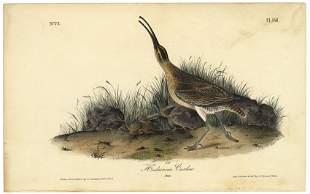 Audubon octavo Hudsonian Curlew Pl 356 Litho