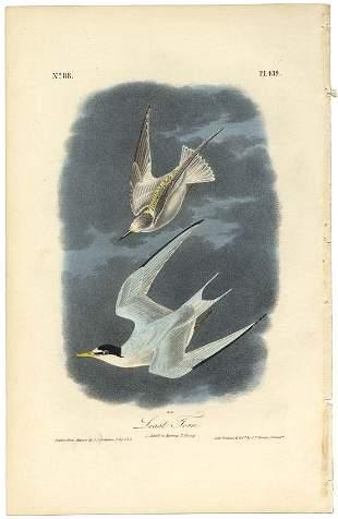Audubon octavo Least Tern Pl 439 Litho