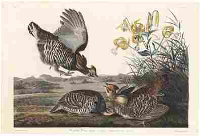 Audubon-Havell, Pinnated Grouse P. 186, Engraving