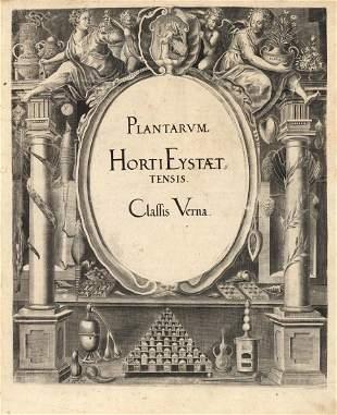 Basilius Besler Hortus Eystettensis Engraving