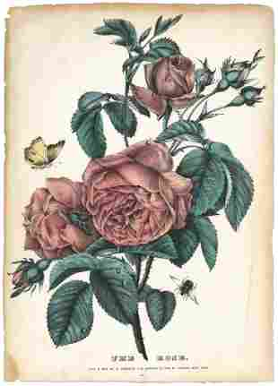 Currier Ives The Rose Lithograph