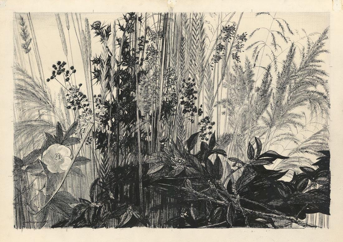 Stow Wengenroth, Roadside Garden, Drawing