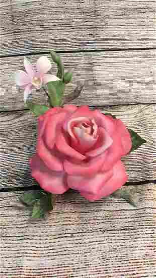 Boehm Rose # 167