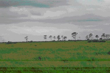 30: 5+ Acres in Equestrian Community Venus, FL