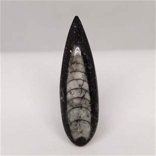 16.10 ct Natural Orthoceras Fossil
