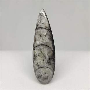 20.55 ct Natural Orthoceras Fossil