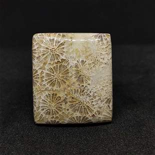 24.10 ct Natural Fossil Coral