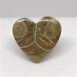 15.55 ct Natural Spider Web Fossil Coral