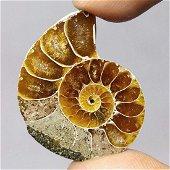 25.60 ct Natural Ammonite