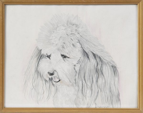 464: 20th C. Poodle Drawing