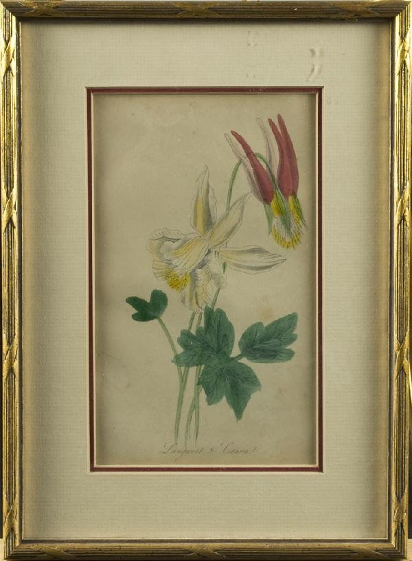 9: Early 20th C. Colored Botanical Lithograph