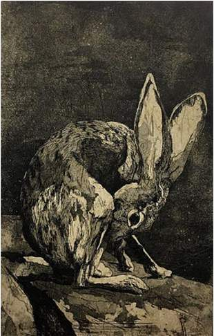 YOUNG HARE