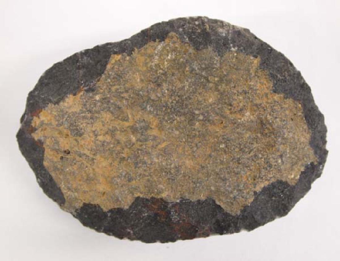 Large Trilobite Fossil - 4