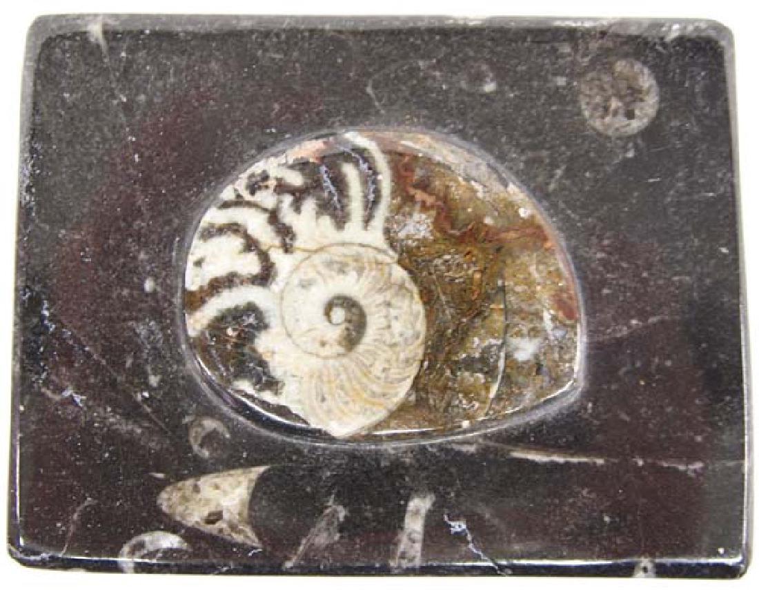 Orthoceras Fossil Lidded Trinket Box - 2