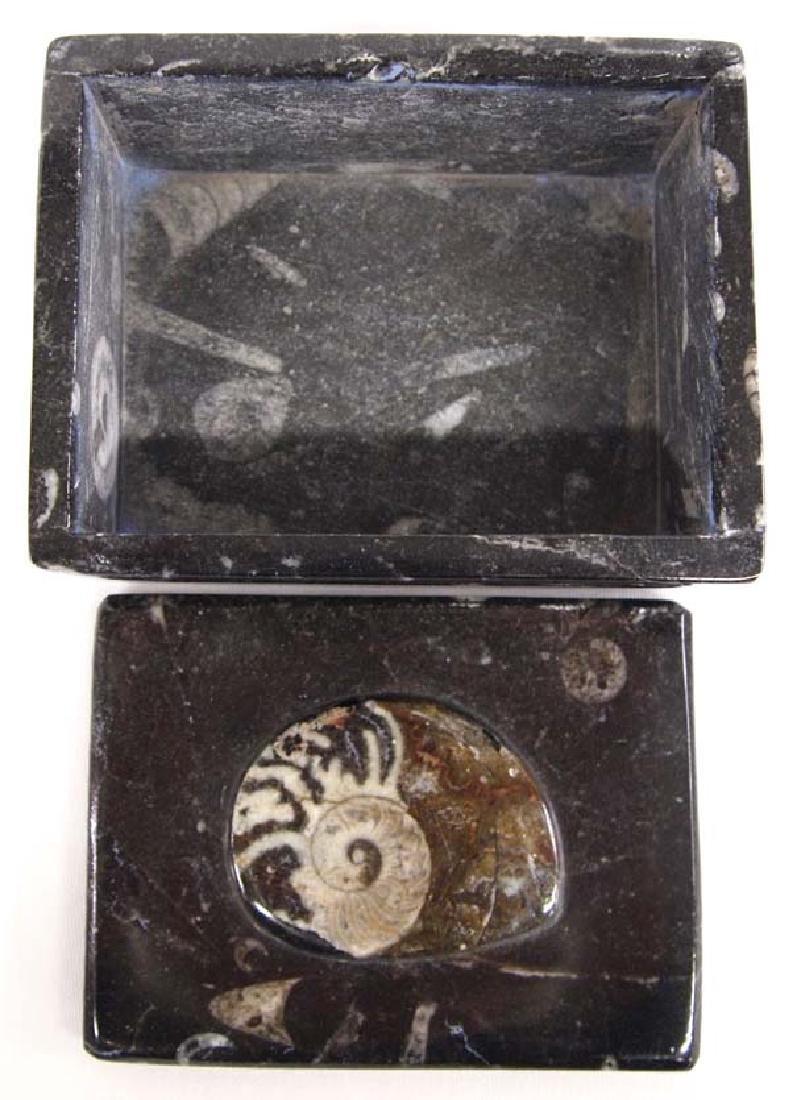 Orthoceras Fossil Lidded Trinket Box - 3