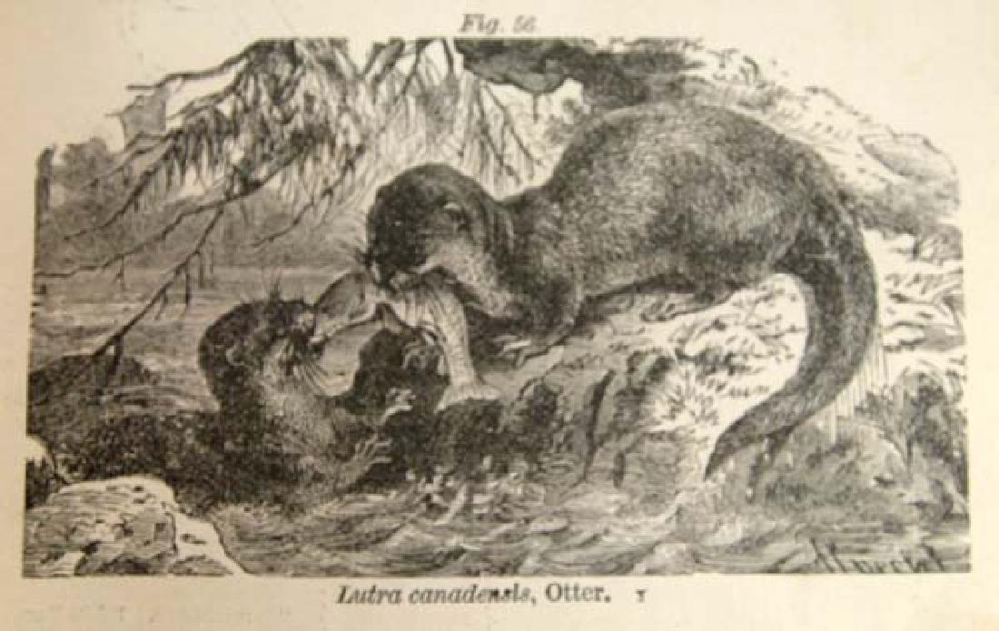 1876 Fourteen Weeks in Zoology by Steele, Book - 4