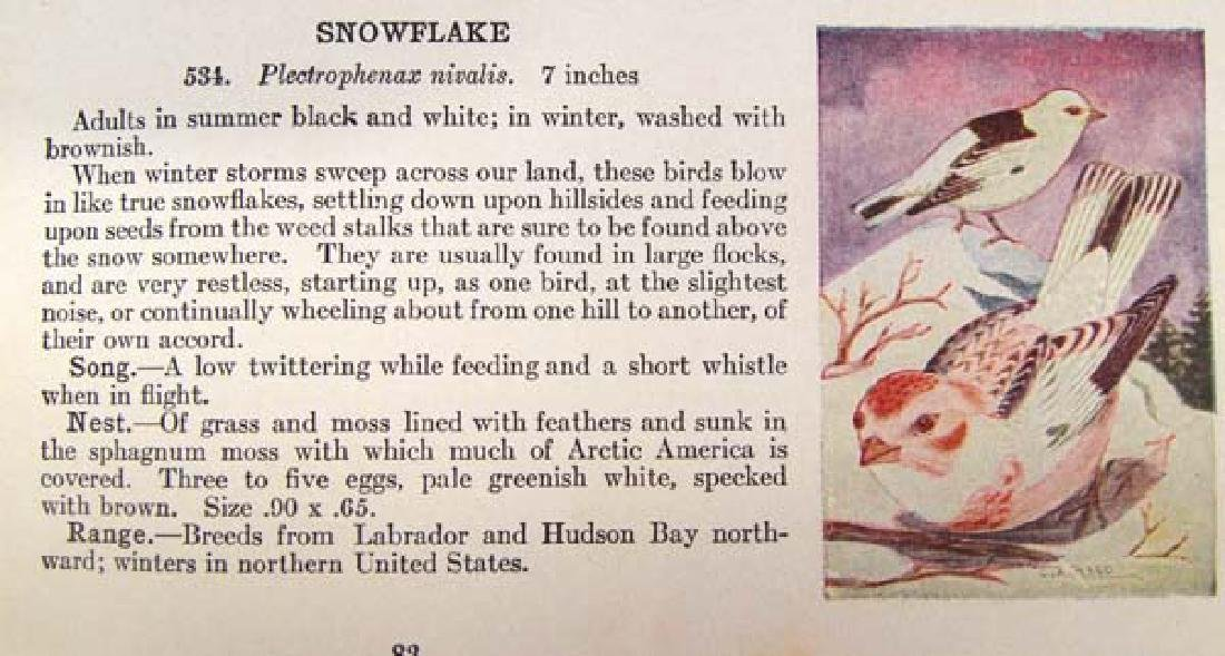 1909 Bird Guide on Land Birds East of the Rockies - 3