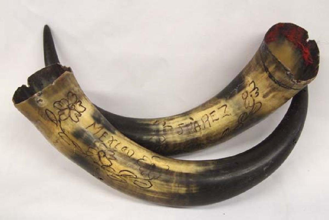 2 Mexican Engraved Bull's Horns