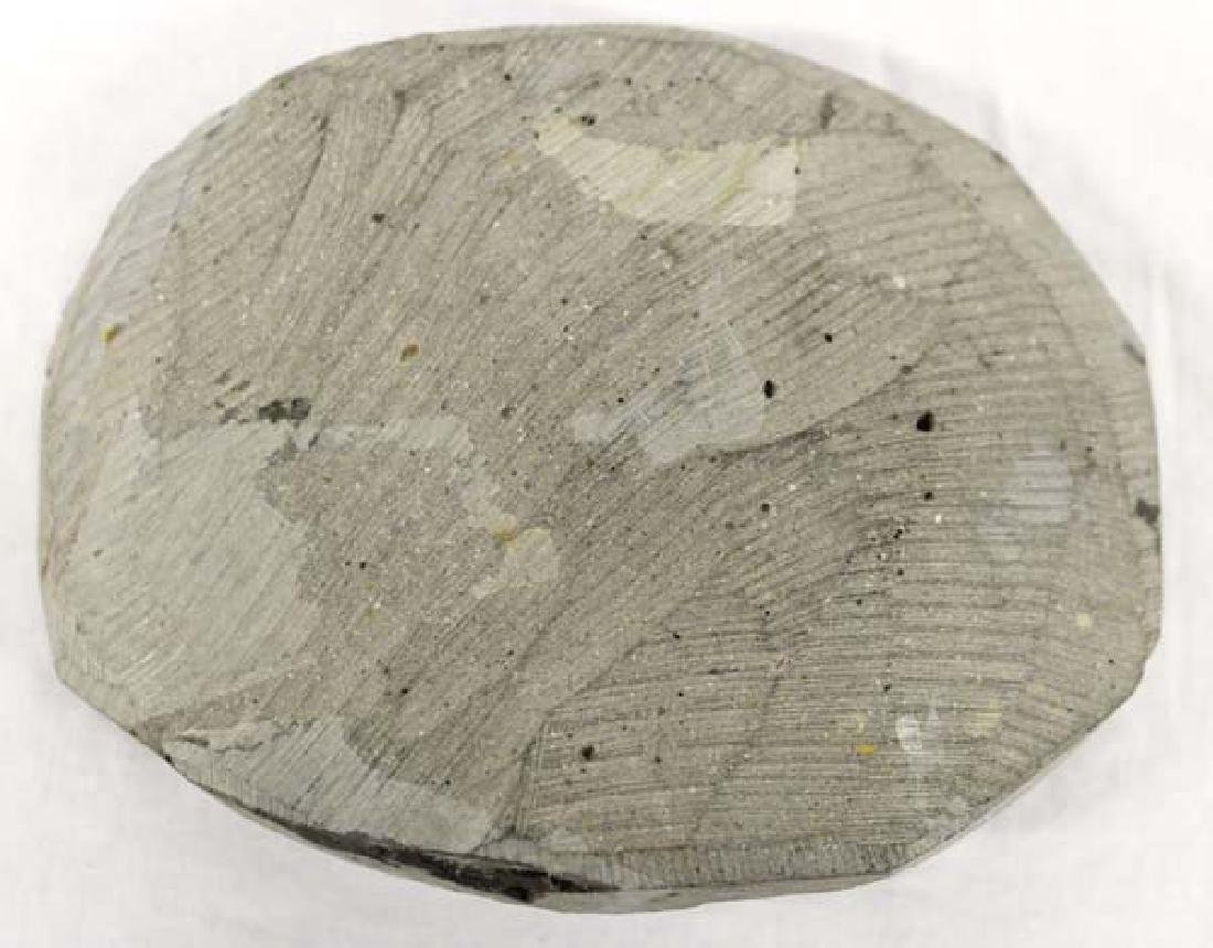 Trilobite Fossil - 3