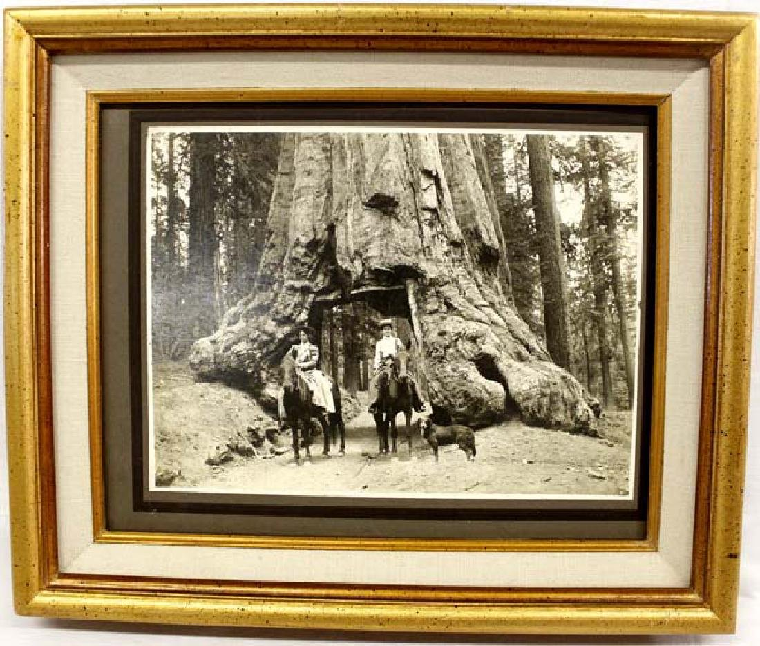 Antique Original 1905 Photograph