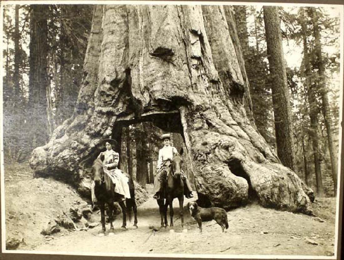 Antique Original 1905 Photograph - 2