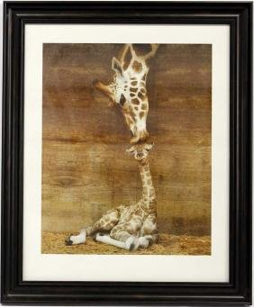 Framed Print First Kiss by Ron D'Raine, Giraffes