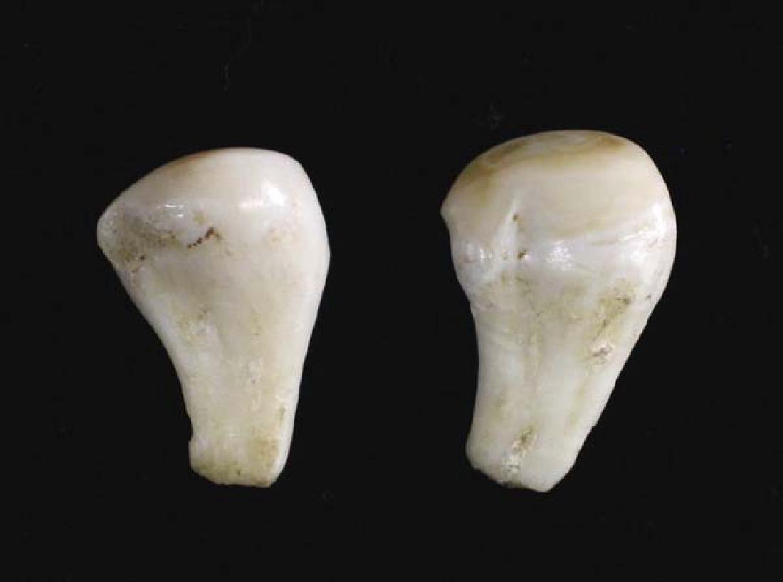 2 Elk Teeth