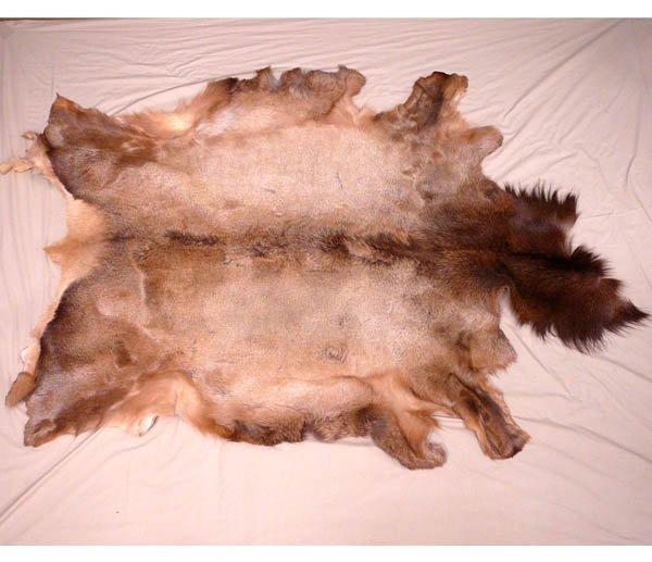 1509: Large Tanned Elk Hide 67'' x 48''