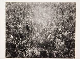 James Baker: Nauset Beach, 1974