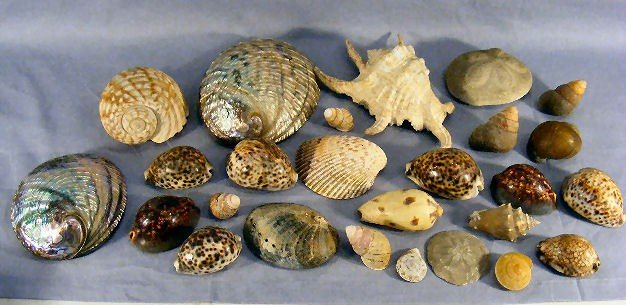 10P: Lot of misc. seashells, abalone shells