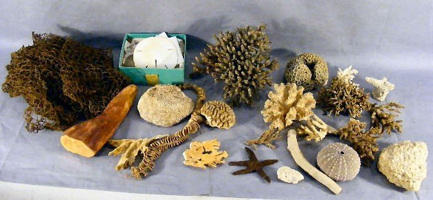 11P: Lot of misc. coral, sand dollars, sponge, driftwoo