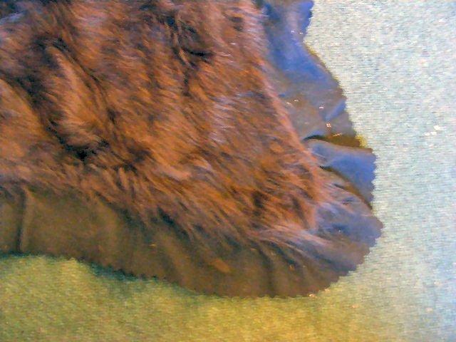 "166B: Early 1900's bear skin sleigh/ auto blanket, 57""  - 3"