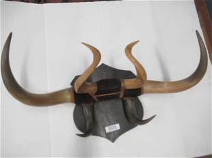 Early 1900s Hat Rack Made Out of Horns