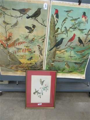 Audubon Chart No 2 and No 4 by Audubon Society