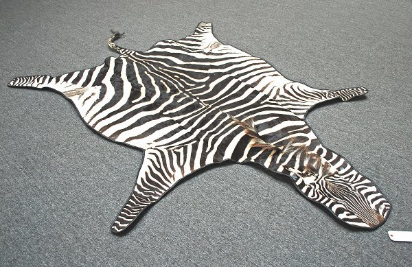 1: Zebra Rug; Exported from Tanzania 2005 Certificate