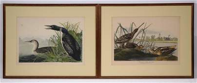 (2) FRAMED AUDUBON BIRD PRINTS