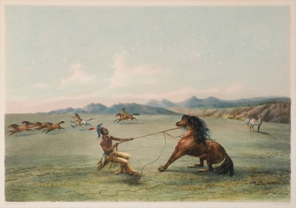 3: Catlin, George: Catching the Wild Horse