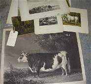 297 Early Cow Prints Most 19th Century