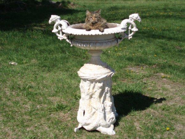 10: 19th c. cast iron garden urn on rustic pedestal w/l