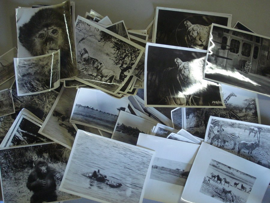 "118: Large lot of wildlife glossy photos, most 8"" x 10"""