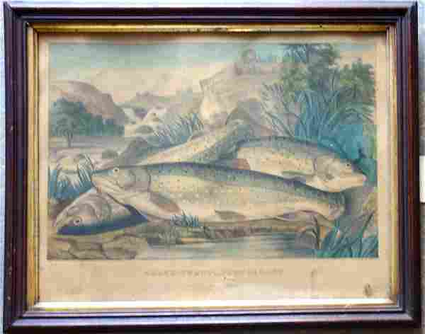 """Hand colored lithograph entitled """"Brook Trout, Just"""