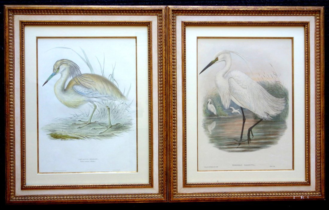 Pair of  J. Gould & H.C. Richter bird lithographs of