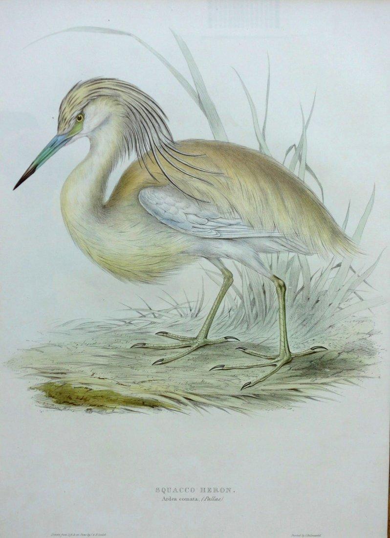 Pair of  J. Gould & H.C. Richter bird lithographs of - 2