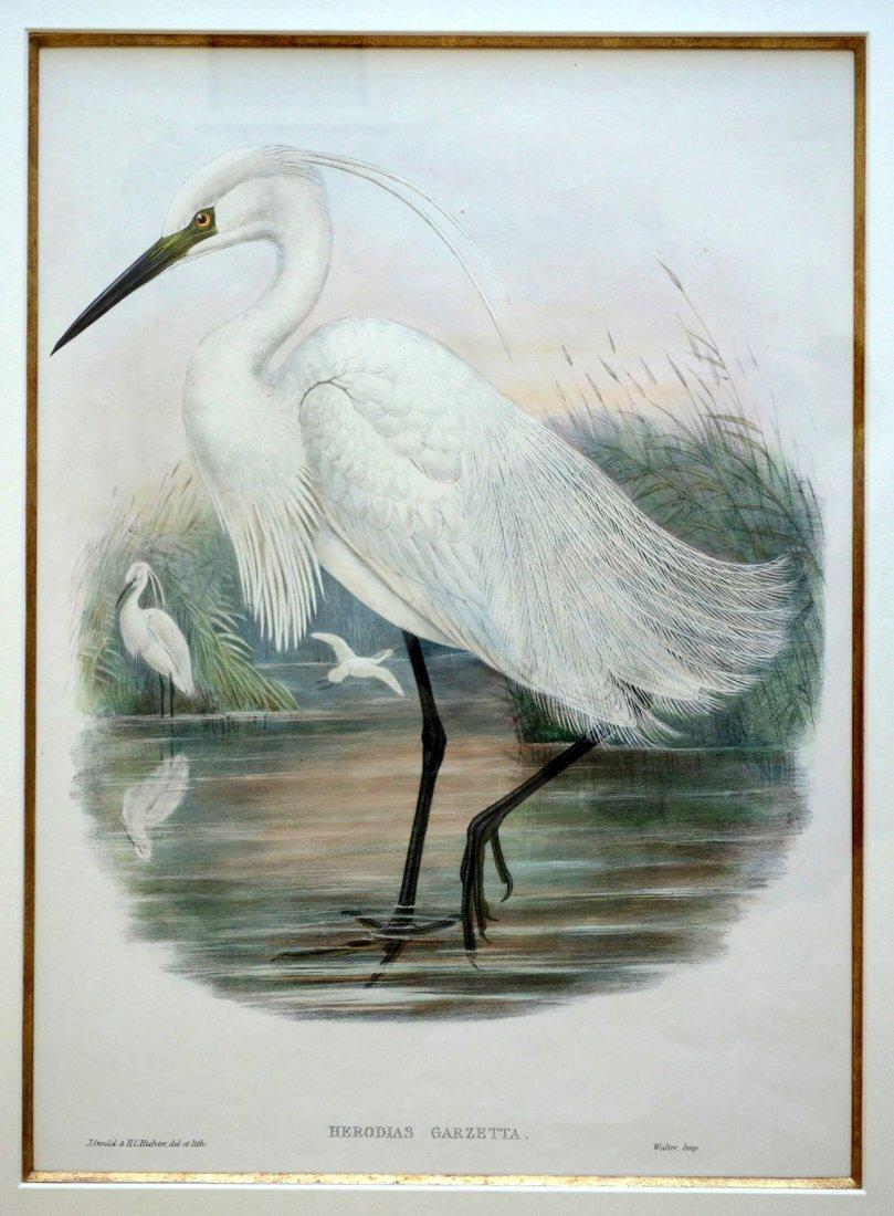 Pair of  J. Gould & H.C. Richter bird lithographs of - 5