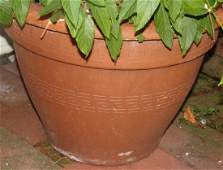 Terra Cotta Planters