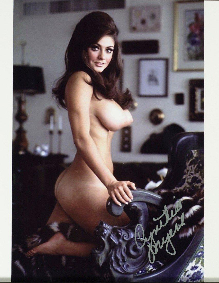 Great tits burnette