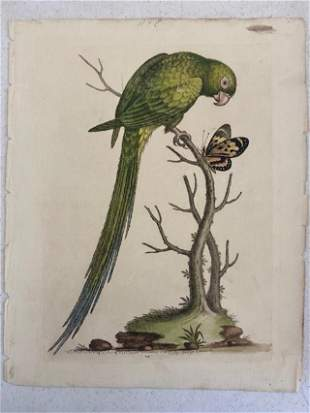 Handcolored Ca. 1750's George Edwards Bird Print