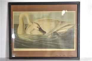 "J.J. Audubon ""Trumpeter Swan"" R. Havell Print"